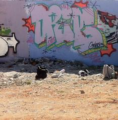 Barca Drips dos (Fresh Tagz crew) Tags: mtl barcelona graff graffiti drips gouttes goteos