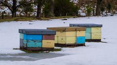 Bees 5 (NOL LUV DI) Tags: snow napier hawkesbay