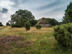 Schuppen (sozl) Tags: lüneburgerheide schuppen strohdach heide niedersachsen germany deutschland norddeutschland gras landschaft wolken