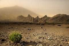 Lonesome (amiglia) Tags: tenerife teide vulcano canaryislands sand desert light