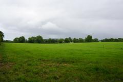DSC05115 (raehyunie) Tags: dark hedges ireland