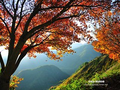 DAO-86898 (Chen Liang Dao  hyperphoto) Tags:   taiwan