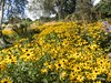 Clyne Gardens 2016 09 30 #11 (Gareth Lovering Photography 3,000,594 views.) Tags: clyne gardens botanical swansea wales flowers trees shrubs park olympus stylus1s garethloveringphotography
