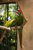 Cwtch [Bali, Indonesia] (Melvinia_) Tags: park red bali green bird nature colors canon indonesia rouge 50mm bokeh parrot vert bec oiseau papagei balibirdpark perroquet indonésie canoneos450d digitalrebelxsi