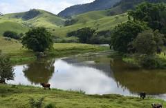 Uma curva do rio do Peixe (Mrcia Valle) Tags: brazil minasgerais rio brasil reflections river landscape nikon interior bamboo tropical reflexos outono brasile bois roa brsil bambuzal gado riodopeixe paisagembrasileira belmirobraga d5100 paisagemmineira mrciavalle