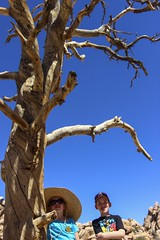 Tofu shooting! (Four Straites) Tags: cactus flower tree nationalpark desert joshua joshuatree cave bolder