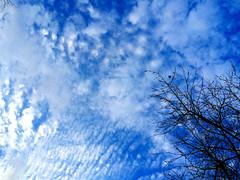 Sky over tree