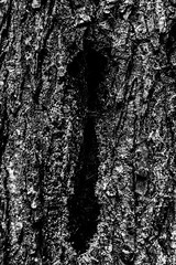 Sheela II (Alistair Henning) Tags: street bridge bw canada vancouver bc suspension britishcolumbia streetphoto capilano yvr ricoh alistair henning capilanosuspensionbridge p10 gxr alistairhenning