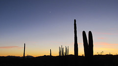 Organ Pipe Cactus Sunset (Mike Dole) Tags: arizona organpipecactusnationalmonument