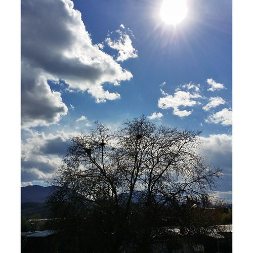#tree #sky #clouds #sun