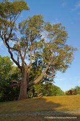[No winter, no autumn] (Empíricamente erróneo .-.) Tags: chile sunset summer naturaleza tree green nature atardecer nikon south valdivia islateja parquesaval savalpark