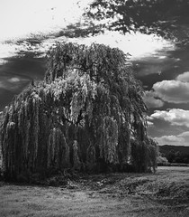 Wind In The Willows (Prespective) Tags: landscape activeassignmentweekly bestofweek1 bestofweek2 bestofweek3 bestofweek4