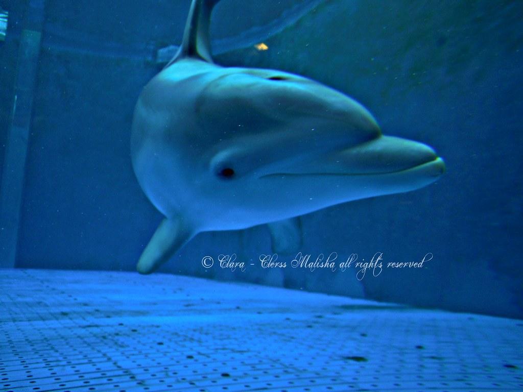 cetacea liguria - photo#29
