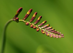 Summer 2016 LBG C19 (Lostash) Tags: life flowers plants nature gardens flora leicesterbotanicalgardens