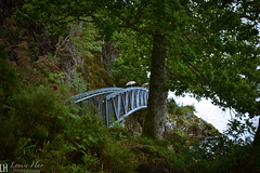 LochLomond015 (louisehay) Tags: loch lochlomond scotland balmaha bridge