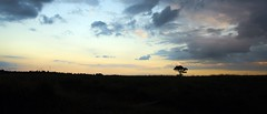 Lonely Tree at Sunset (Wijnand Kroes Photography) Tags: sunset sky tree clouds landscape view veluwe
