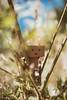 Boxy (raphaelvandersteen) Tags: 50mm nikon bokeh d750 boxy danboard
