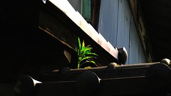 Green (OFF till 14th Bamboo Barnes - Artist.Com) Tags: japan asia oriental vivid bold strong light shadow contrast photo black blue red distressed abstract bamboobarnes roof tile zinc wall wood osaka