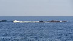 Ocean (Rckr88) Tags: ocean sea water waves wave rocks rockycoastline rock coastline coast coastal plettenbergbay bay westerncape southafrica south africa travel outdoors nature