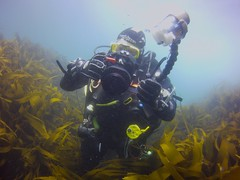 18 July 2016 - Scillies Trip PICT0213 (severnsidesubaqua) Tags: scillies scilly scuba diving
