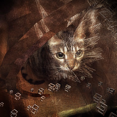 Cat in a Box (lensletter) Tags: cat bengal box ipad matter glitch photomanipulation kreativepeoplegroup