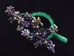 Grape hyacinths muscari (Rima Dadenji) Tags: grapehyacinthsmuscari iphone5s iphone flower flowers nature hyacinth rimadadenji green violet black