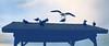 來看夕陽/ Standing on the roof watching sunset (Hoiling.C) Tags: roof sunset america sandiego seagull lajolla traveling gather beautifulhour