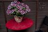 hana (aosuzume's photos) Tags: flower fujifilm x10
