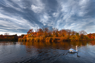 Swan. Lake. 天鵝。湖。