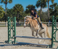 20141213-112538-_D4S9148.jpg (BobHartmannPhotography) Tags: usa fl 365 equestrian equine 1365 2014 swr equestrianpark horseportrait bobhartmann wwwbobhartmanncom bobhartmannphotography bobhartmanncom swrfunhorseshow bcc201501 2014swrfhs swr2014 townofsouthwestranches