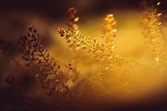 ¿Algo común? (Gerardo Cuaya Portrait Photographer.) Tags: plants naturaleza abstract macro nature colors closeup lights idea plantas concept 70300mm tamron novice abtracto nikond5200