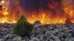 sage brush fire big flames