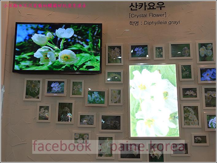高陽國際花卉博覽 (58).JPG
