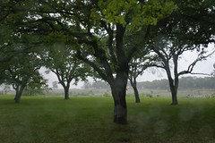 Rain, Sleet and Thunderstorm (stevenpng) Tags: thunderstorm rains sleet bluebonnetsfield nikond800 capturenx2 nikongp1 sunsetcircle nikkor1635mmf4gvr