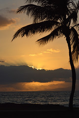 Flare at Night (judymtomlinson) Tags: ocean sunset sky orange usa island maui palmtree flare tropical hawaiianislands d3200 httpwwwjudymtomlinsonphotographyca
