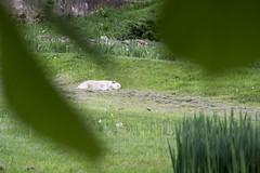 Sleepy (Adrian Epure Photography) Tags: park dog nature animal digital nikon botanicalgarden d3100