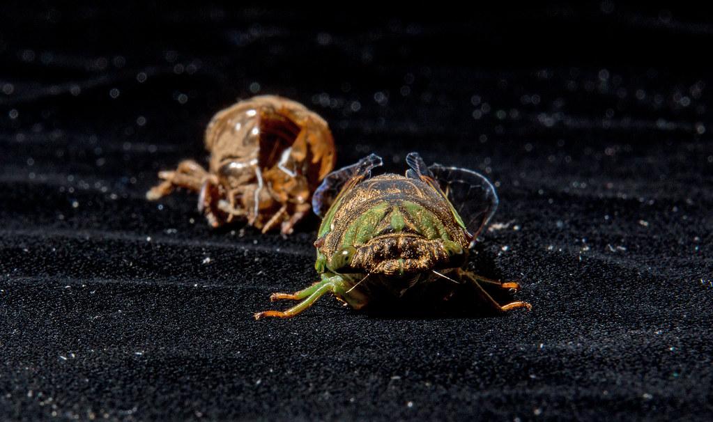 Caf Fr  Bug