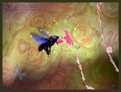C'est a l'amur ! This is how Lve is! (Emmanuelle Baudry) Tags: couleur closeup colour composition art artwork abstract artsurreal abstrait artfantasy artnumrique artdigital abeille abeillecharpentire nikon nature nikonmacrolens emmanuellebaudry emart ps
