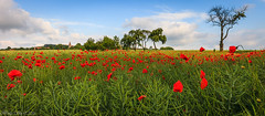 Czech Countryside-1 (wengeshi) Tags: czechrepublic countryside field red poppy flowers church travel colorful