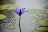 DSC_0822 (Steve_McCaul) Tags: beginnerdigitalphotographychallengewinner