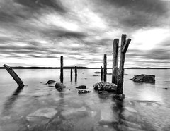 What once was (gordjohnson) Tags: pilings pold wharf ocean bellisland shoreline rocky coast clouds littlebellisland newfoundland sealife sunny day mono black white
