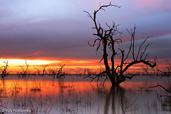 Sunset at Menindee Lakes, Outback NSW, Australia (renatonovi1) Tags: sunset menindeelakes outback nsw australia brokenhill landscape lake water tree
