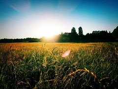 Just another beautiful sunset with crazy light... (ray.burst) Tags: lowsun beautiful sun glare goldenhour iphone lensflare flare filter nature golden light mood sonnenuntergang sunset iphone6s feld pflanze plant landschaft heiter scenery