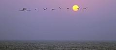 23.1 (Diznoof) Tags: kite colombie santa veronica travel