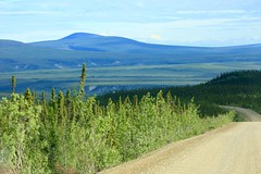 Above the Arctic Circle Dempster Highway Yukon Canada North America (eriagn) Tags: northamerica canada yukon dempsterhighway dirtroad landscape mountainous taiga muskeg tundra permafrost vegetation geology trees spruce rock gravel erosion weathering remote isoated pristine summer midnightsun arcticcircle sunight overcast wilderness habitat ecosystem eriagn ngairehart dawsoncity eagleplains inuvik farnorth greatnorth geological mountains ranges continentaldivide roadtrip travel photography