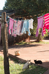 bucolic (Stephanie D'Ornelas) Tags: altnia bucolic paran brazil colours cats gatos animals