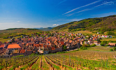 On the wine route (A Camera Story) Tags: alsace alsacewineroute riquewihr europe france vineyards winery alsacechampagneardennelorrain alsacechampagneardennelorraine fr sonydslta99 sony2470mmf28cz
