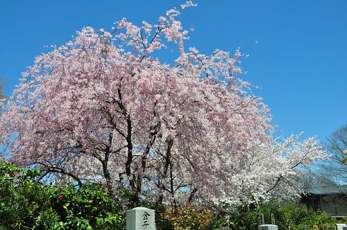 Thumbnail from Kodai-ji Temple