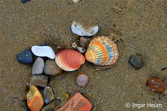 Shells at the beach (Ingar H) Tags: beach strand sand shell skjell muslinger