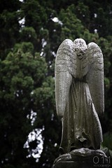 Cementerio Central de Montevideo - Uruguay (011 Fotografa) Tags: cemetery canon uruguay eos cementerio muerte viajes vida montevideo 60d